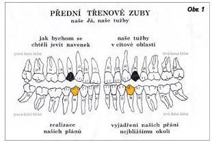 zuby4